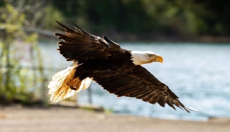 windstorm and the eagle inzaar